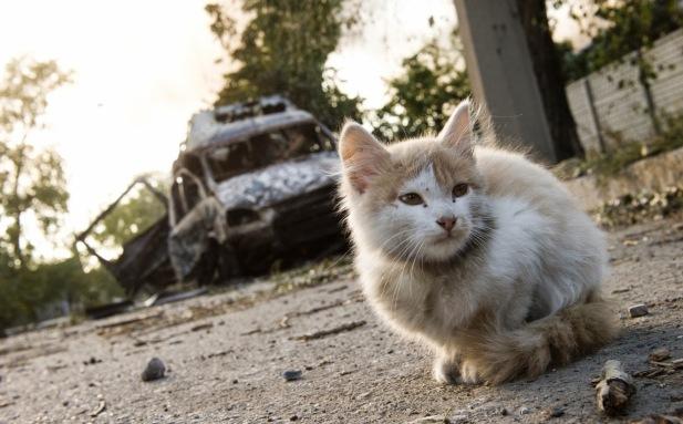 Cat Ukraine